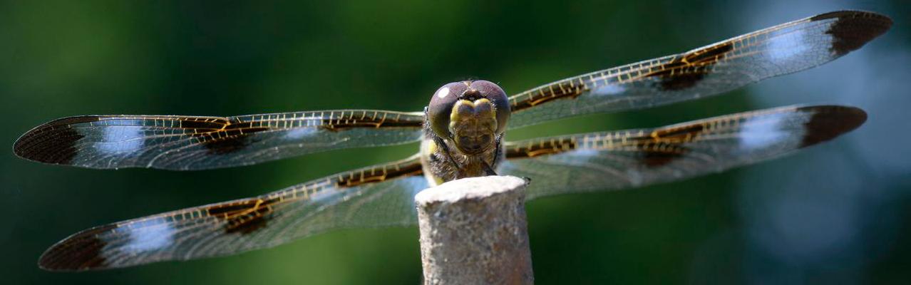 Entomological Society of Canada – –